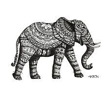 The Elephant Photographic Print