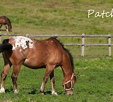 Patch - NNEP Ottawa, Ontario by Tracey  Dryka