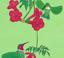 Ruby-throated Hummingbirds  by Walter Colvin