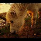A small Pony by SylviaHardy