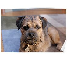 Awesome Border Terrier Poster