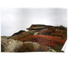 Writing-on-Stone in Autumn Poster