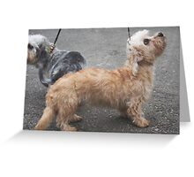 Cool Border Terrier Greeting Card