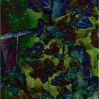 ivy and bricks… by dabadac