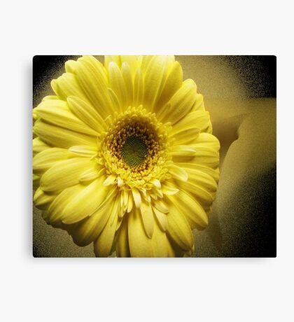 Yellow Gerbera Canvas Print