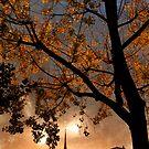Evening in Paris by Laurent Hunziker