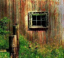 Down on the Farm  by Marcia Rubin