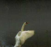 Swan Song by Barbara Gerstner