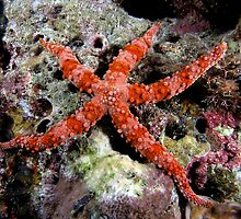 Special Starfish