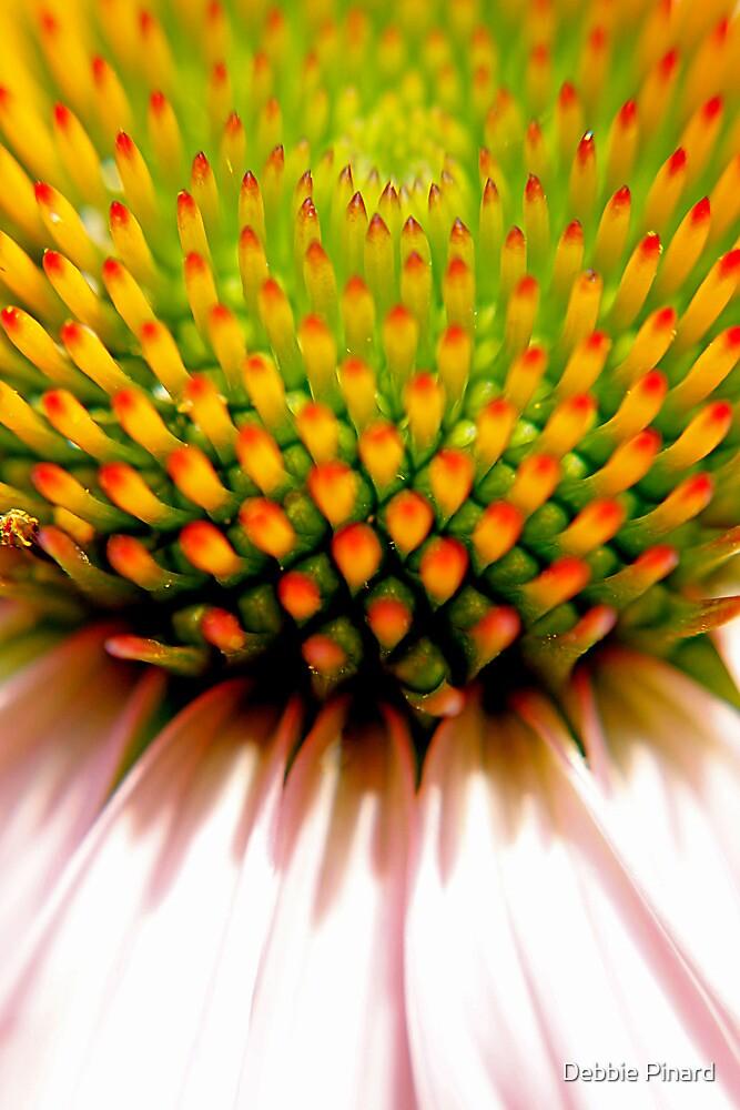 Echinacea - Macro by Debbie Pinard