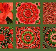 Kaleidoscope of flowers by Esperanza Gallego