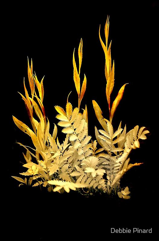 Weeds - Infrared by Debbie Pinard