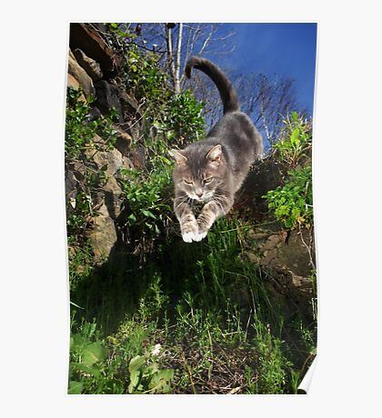 Jumping cat Poster