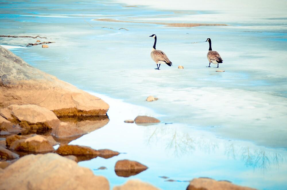 Canada Geese by Manar87