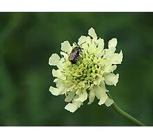 Nectar Photographic Print