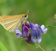 Sweet Alfalfa by Kathi Arnell