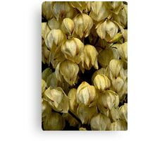 Showers Of Yucca Flowers Canvas Print