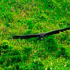 Black Eagle. by bulljup