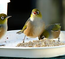 Mum Said Always Have A Good Breakfast!! - Waxeye NZ by AndreaEL