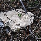 spongi fungi (the Dog Vomit slime mold.  Ugh!) by Lenny La Rue, IPA