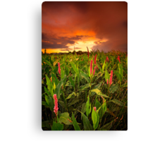 Just Past Pink Canvas Print
