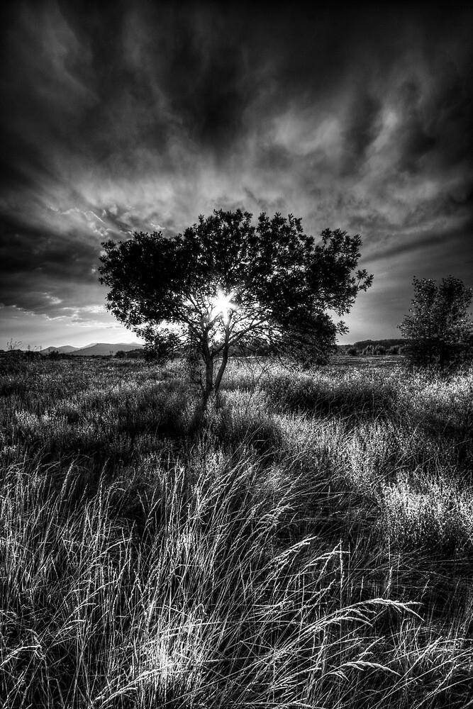 Solitary by Bob Larson