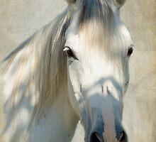 White Filly by KBritt