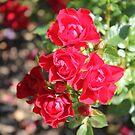 Little red Flower by Abigail Jennings