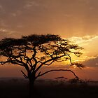 Serengeti Sunset by Michael Kilpatrick