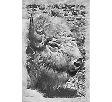 buffalo head Photographic Print