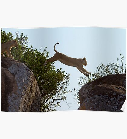 Leaping Lion Poster