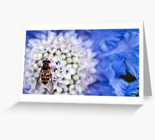 Hover fly on flower  Greeting Card