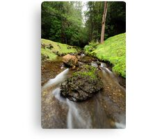 Downstream from Strickland Falls Canvas Print