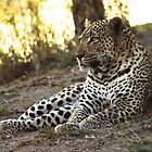 Mvula...'Rain' in shangaan! Sabi Sands-South Africa by Bassy