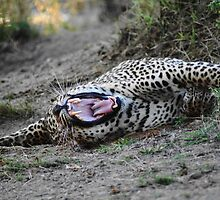Stretching - South Africa by Bassy