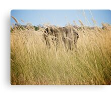 From the tall grass Canvas Print