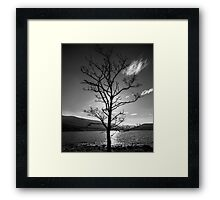 Tree by Loch Arkaig Framed Print