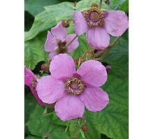 Purple-flowering Raspberry- Rubus odoratus Photographic Print
