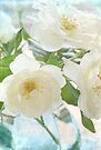 white rose bouquet by Teresa Pople