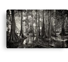 Mangroves - Sabah, Borneo Canvas Print