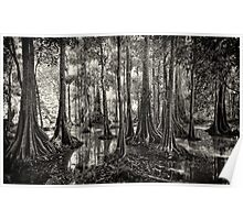 Mangroves - Sabah, Borneo Poster