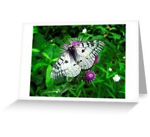 American Apollo Butterfly ~  Greeting Card