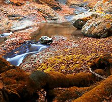 Golden autumn in mountain by plamenx