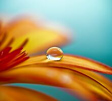 Waterdrop by Michaela Rother
