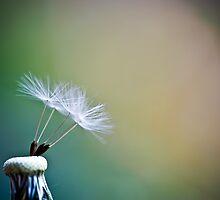 Last dandelion by Michaela Rother