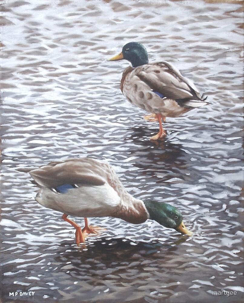 two mallard ducks standing in water by martyee