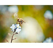 Flying Bee Photographic Print