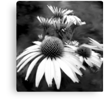 Monotone Cone Flowers with Smear!! Canvas Print