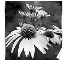 Monotone Cone Flowers with Smear!! Poster