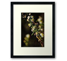 Bee Stalk Framed Print